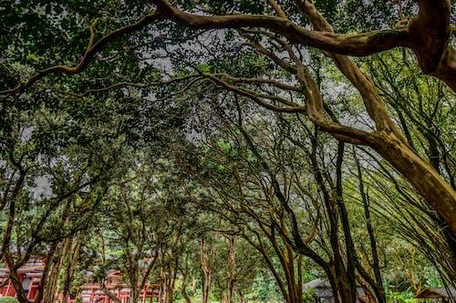 Photos gratuites de arbres, couvert forestier, forêt, mère nature