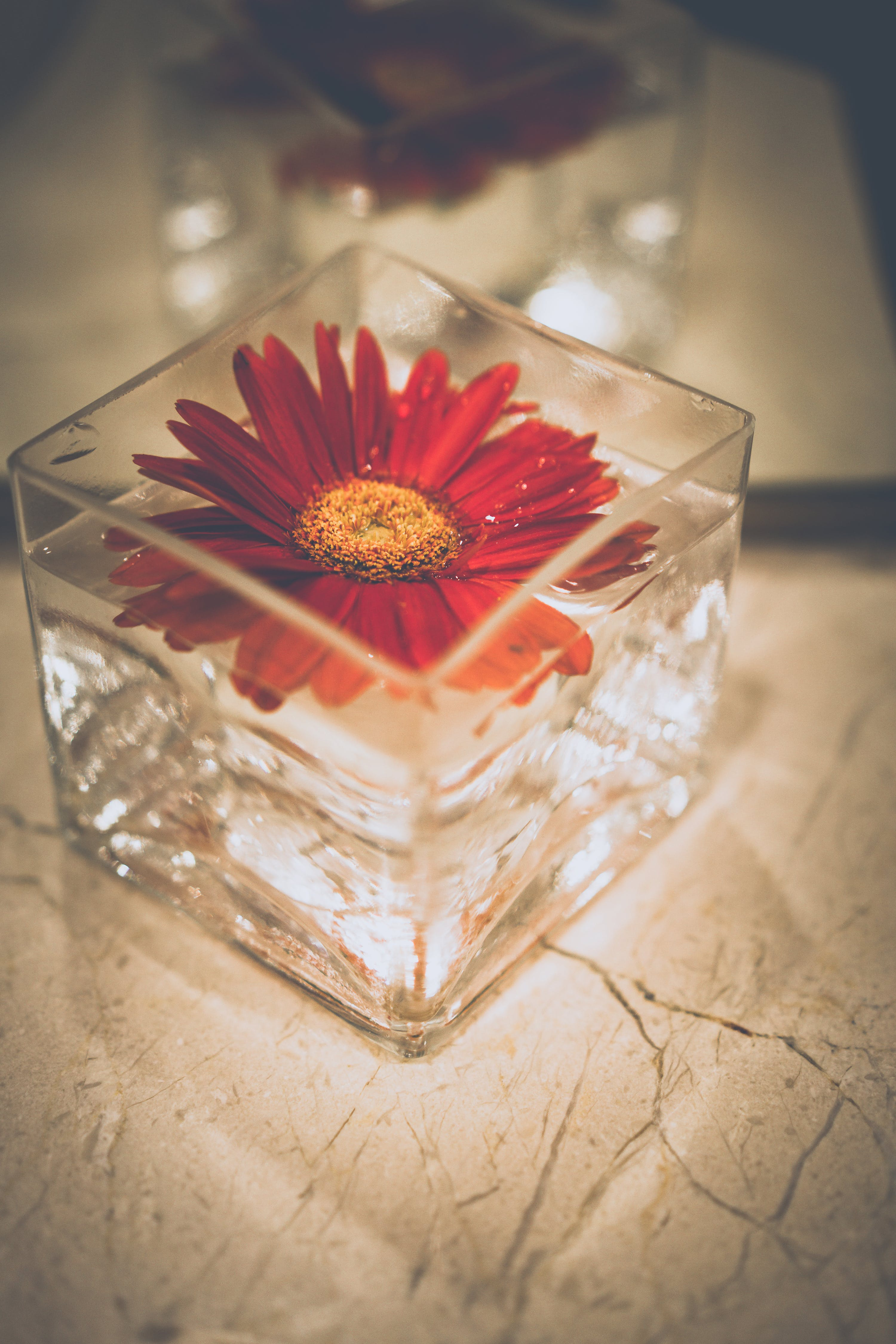 Shallow Focus Photography of Red Petal Flower Decor