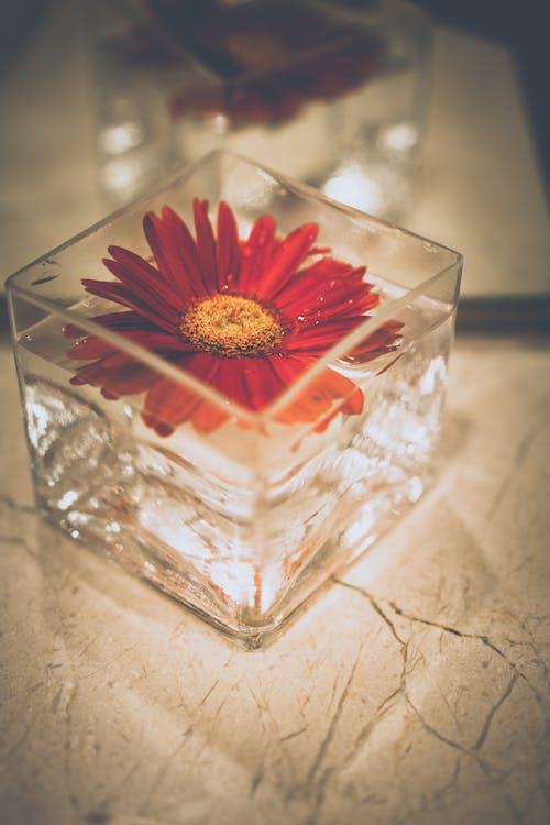 Gratis arkivbilde med blomst, blomsterblad, blomstre, farger