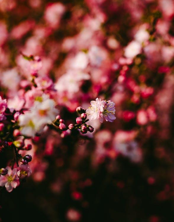 boboci de flori, centrale, creștere