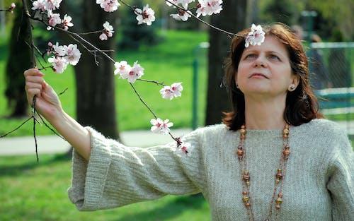공원, 꽃, 꽃 피는 나무, 나무의 무료 스톡 사진