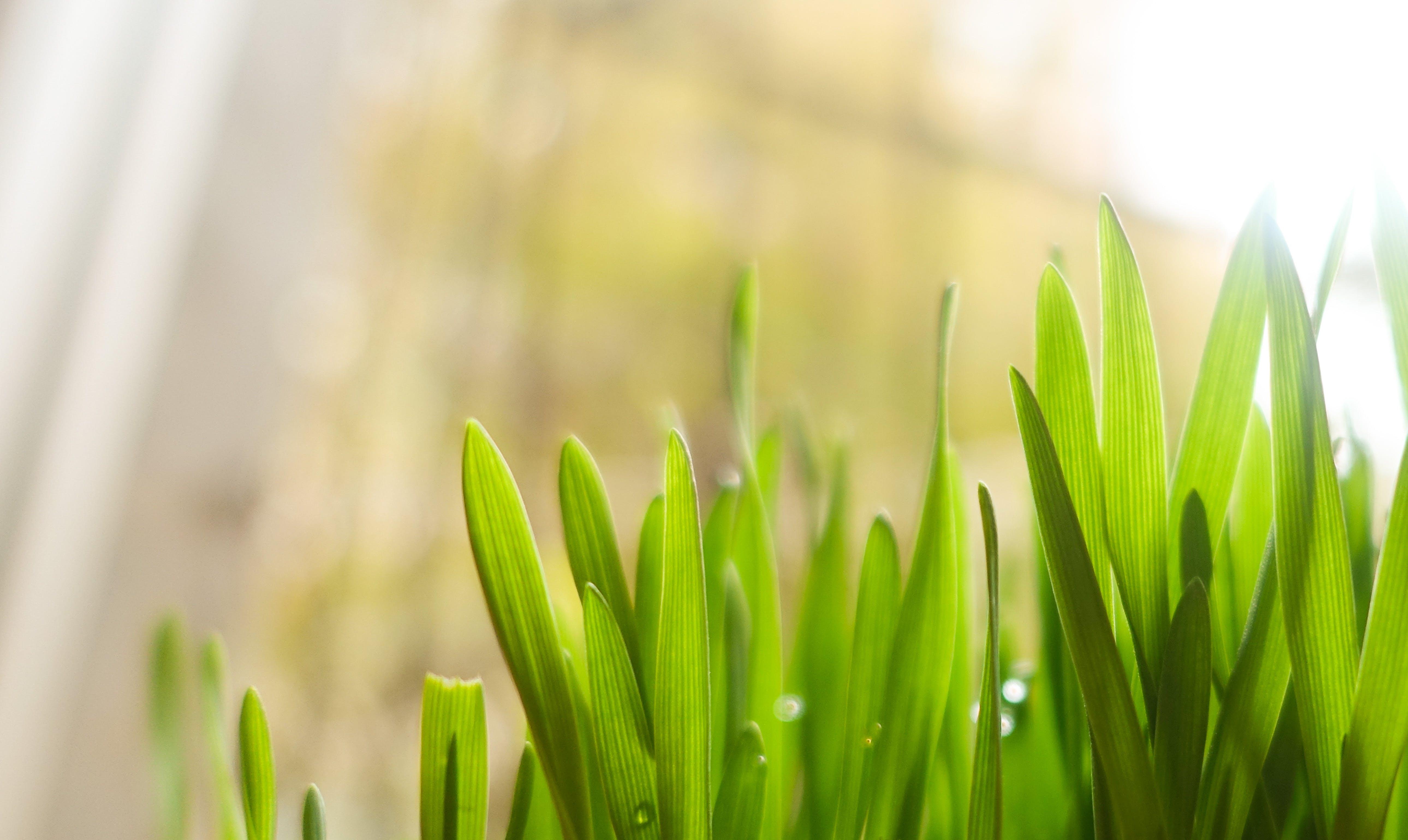 de brillante, concentrarse, crecimiento, efecto desenfocado