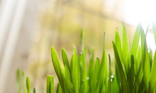 녹색, 무성한, 밝은, 성장의 무료 스톡 사진