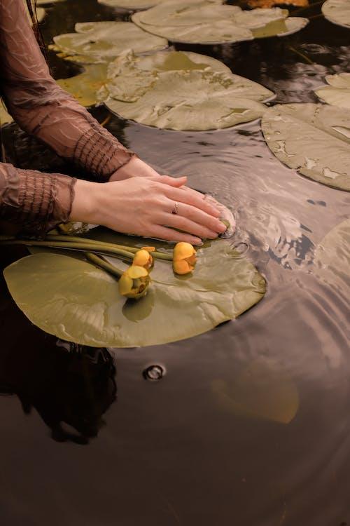 꽃, 만지는, 물의 무료 스톡 사진