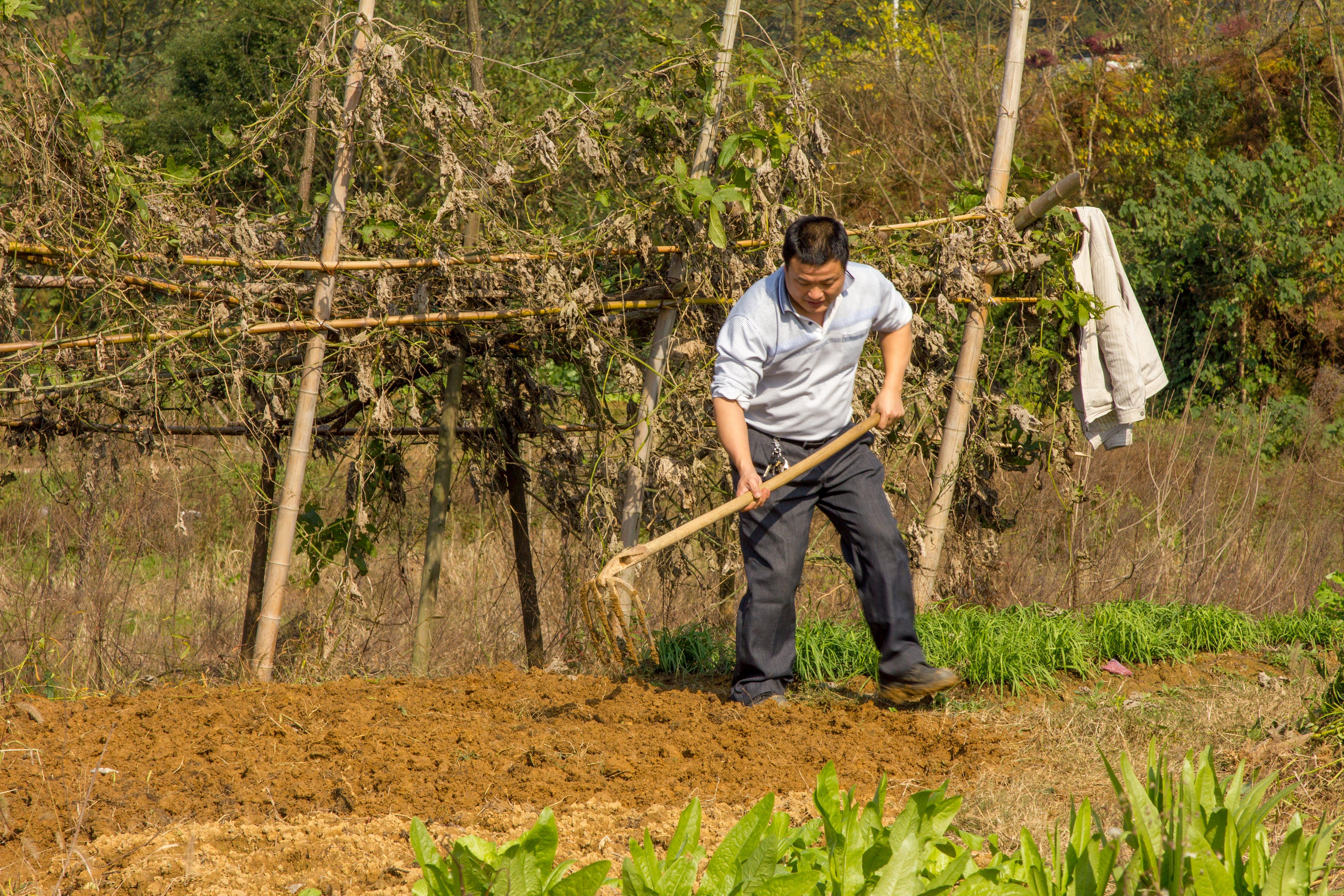 Free stock photo of china, farmer, hoe, labor