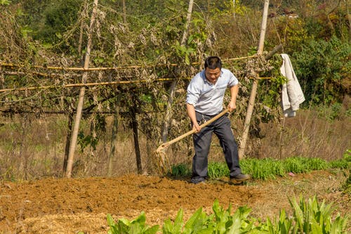 Free stock photo of china, farmer, hoe, labor