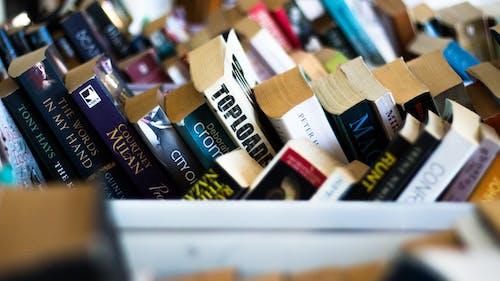 圖書, 庫存品 的 免费素材照片
