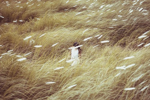 Woman Wearing White Dress Standing in the Middle of Grasses
