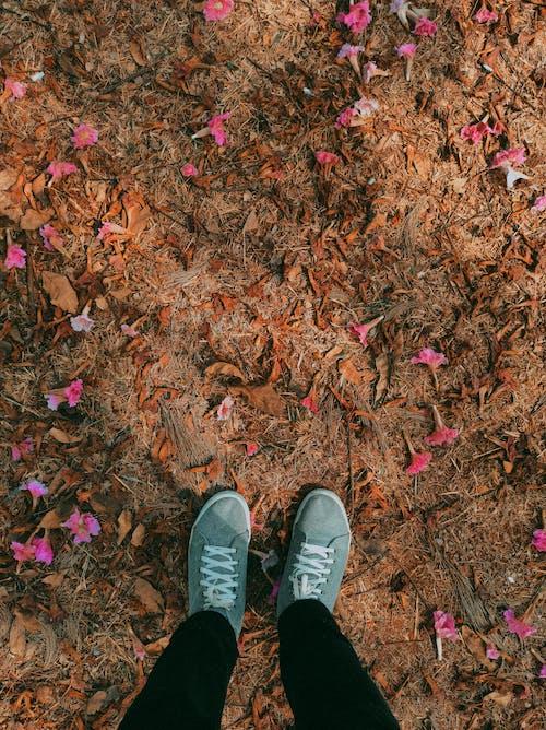Foto profissional grátis de ao ar livre, belo horizonte, borboleta