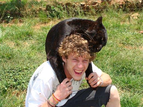 Foto d'estoc gratuïta de gats grans de lleopard negre