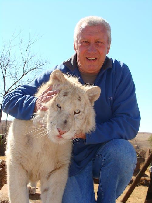 Foto d'estoc gratuïta de tigre blanc depredador gat gran