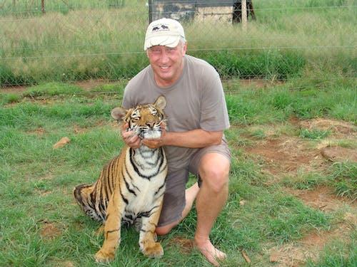 Foto d'estoc gratuïta de depredador de cub de tigre