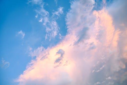 Kostenloses Stock Foto zu atmosphäre, draußen, flaumig