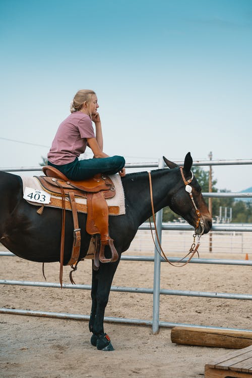 Free stock photo of action energy, adult, cavalry