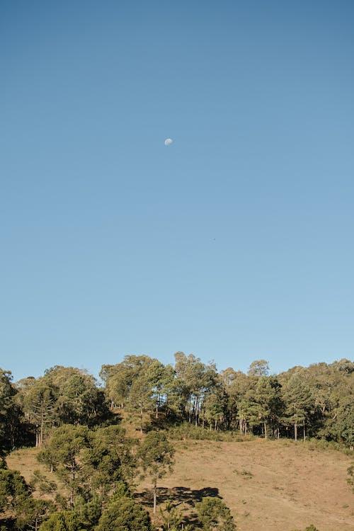 丘, 夏, 夜明けの無料の写真素材