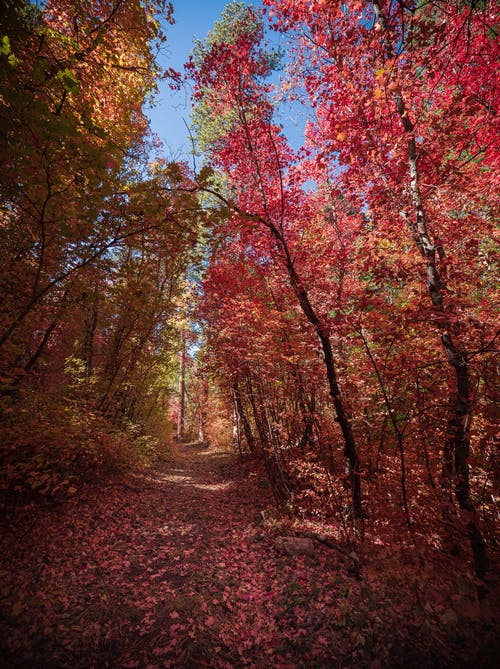 Brown and Red Trees