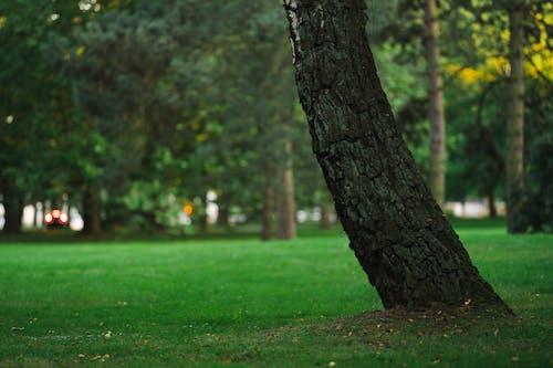Kostenloses Stock Foto zu baum, dunkel, grün