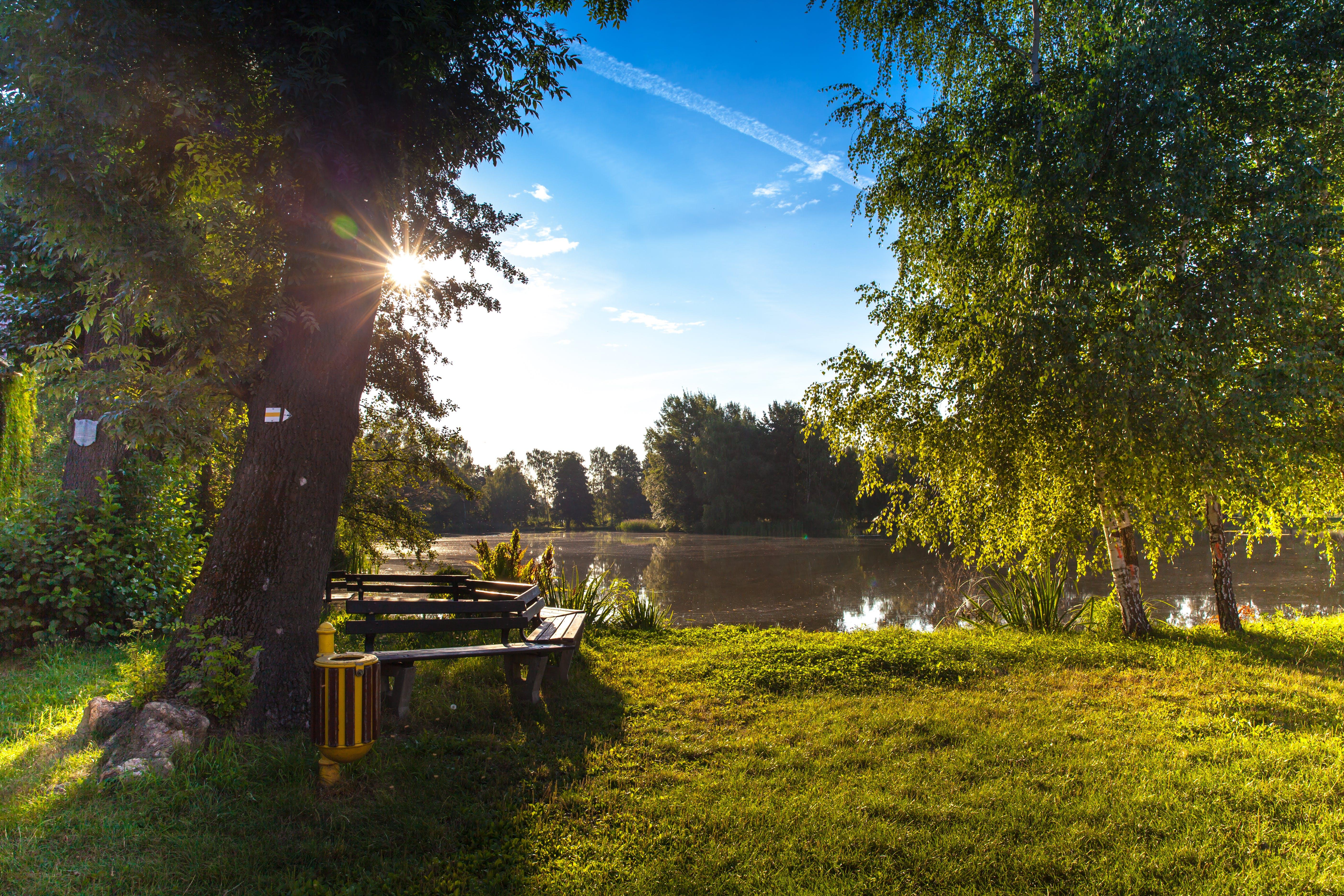 Бесплатное стоковое фото с дерево, деревья, живописный, легкий