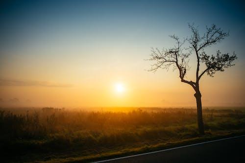 Free stock photo of morning sun, morninglight, sunrise