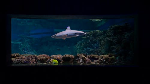 Kostenloses Stock Foto zu aquarium, baden, fisch