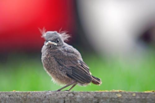 Δωρεάν στοκ φωτογραφιών με μικρό πουλί