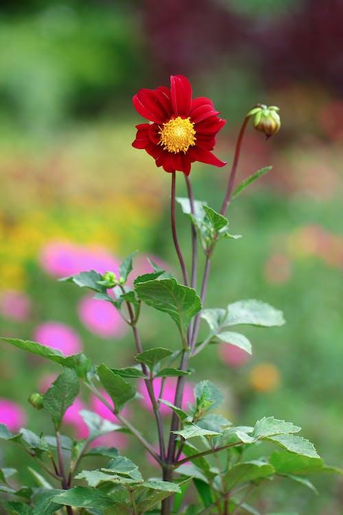 alam, bunga-bunga, kembang