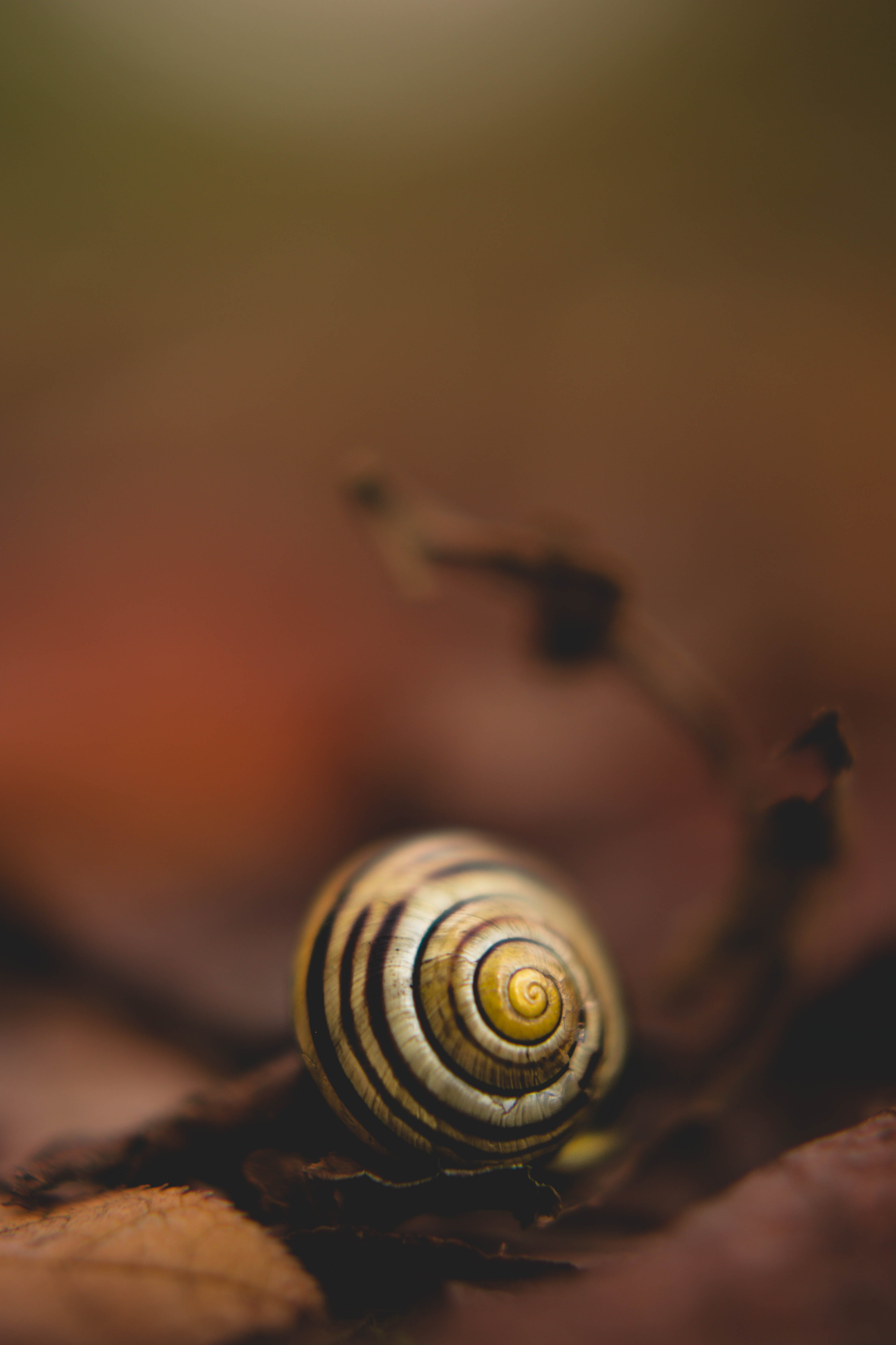 Close Up Photo of White Snail
