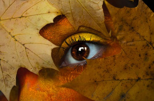 Brown Maple Leaf With Person's Eye