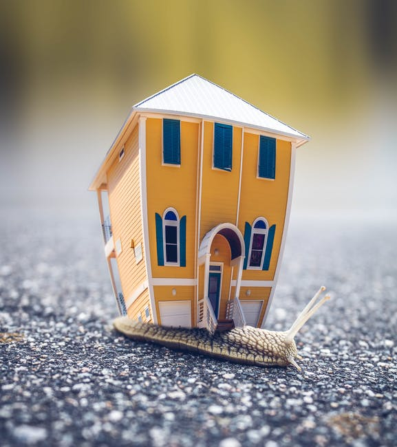 Microphotography of Orange and Blue House Miniature on Brown Snail's Back
