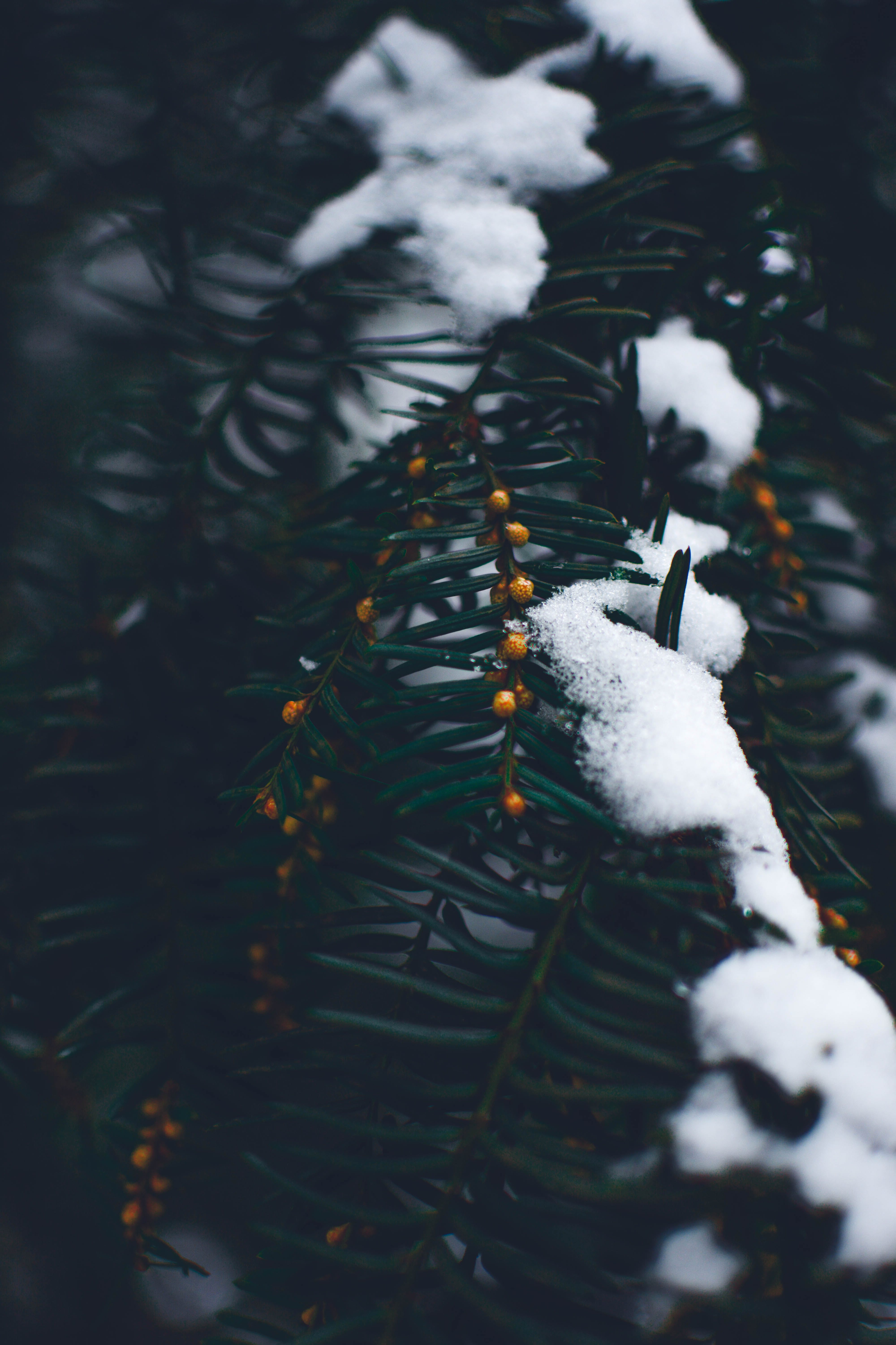 Close Photo of Green Leaf Tree Covered With Snow