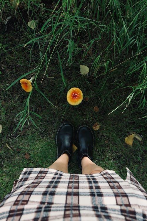 Fotos de stock gratuitas de al aire libre, árbol, bonito