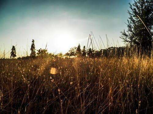 Free stock photo of Meadow and Sunshine, natural
