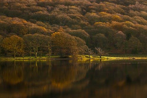 Imagine de stoc gratuită din apă, apus, arbore, arbori