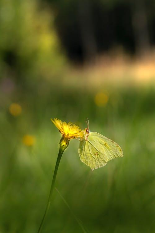 Fotos de stock gratuitas de al aire libre, ala animal, amarillo