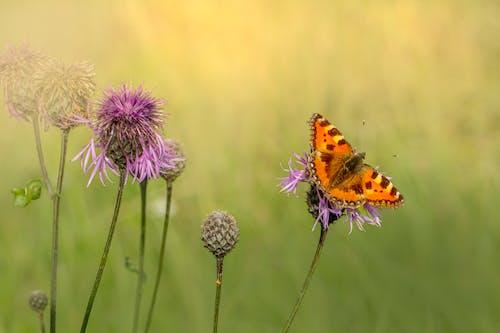 Fotos de stock gratuitas de alas de mariposa, fauna, flor