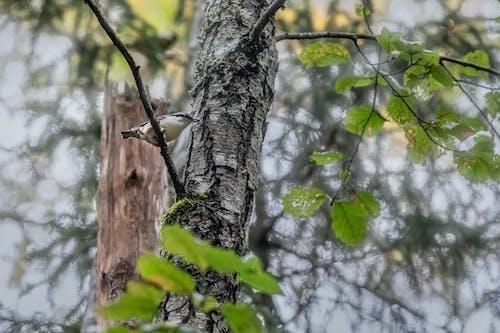 Fotos de stock gratuitas de animal, árbol, bañador