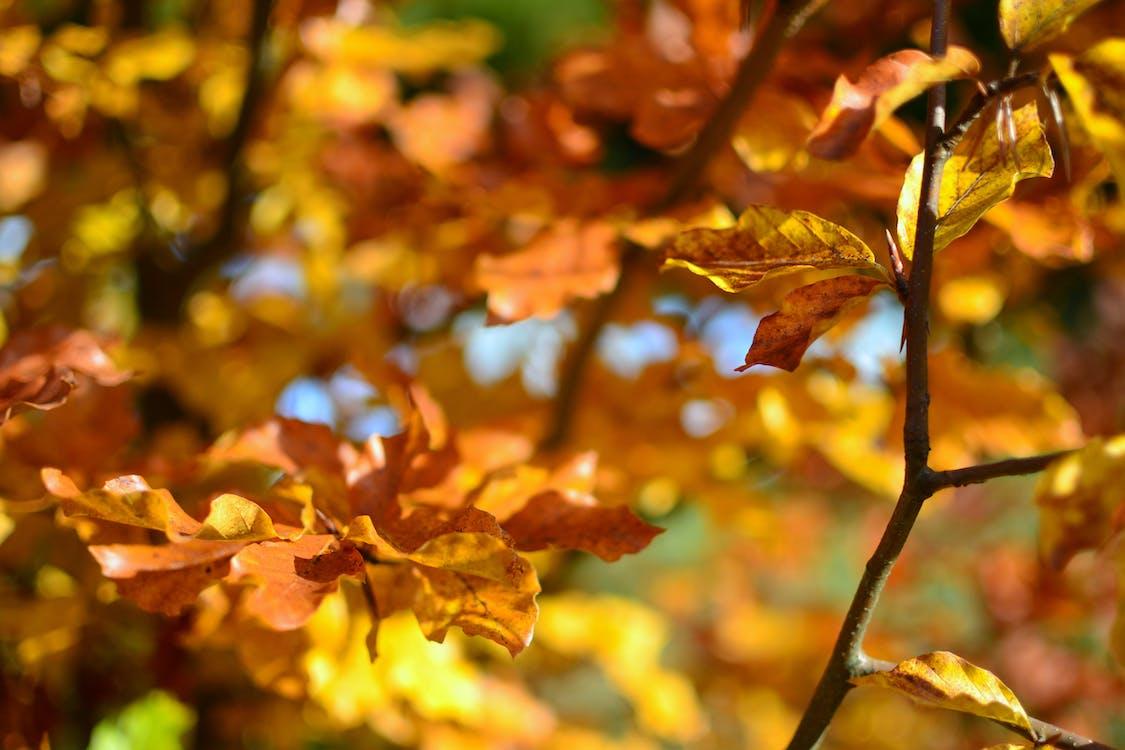 arbres, feuillage, feuilles