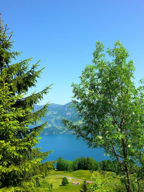 Fotos de stock gratuitas de a orillas del lago, arboles, bosque, montaña