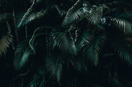 Green Palm Tree during Night Time