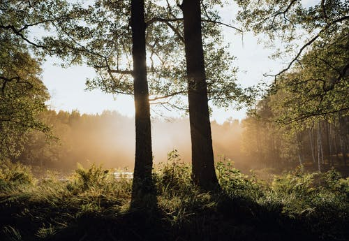 Green Trees on Forest