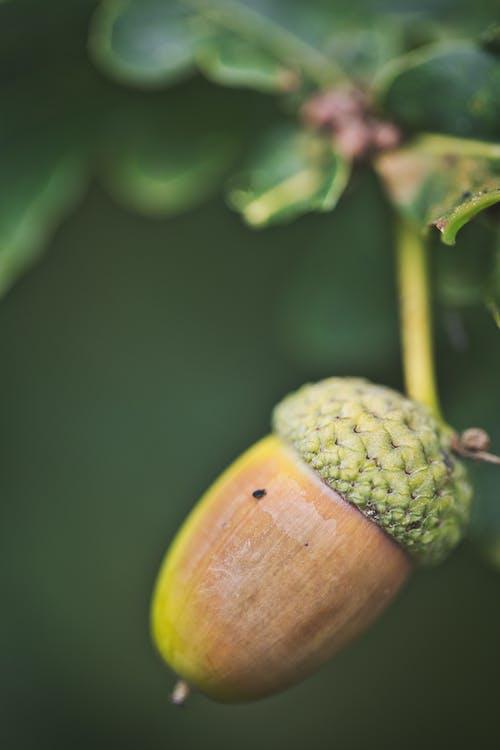 Close Up Shot of a Nut