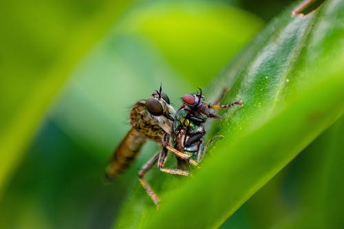 Green and Black Fly Perched on Green Leaf in Close Up Photography