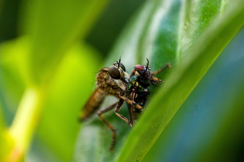 Brown and Black Fly Perched on Green Leaf in Close Up Photography