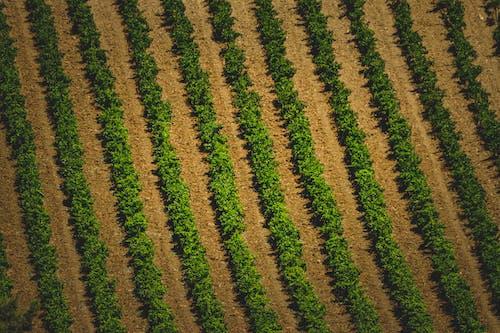 Δωρεάν στοκ φωτογραφιών με αγρόκτημα, αγροτικός, αμπέλι