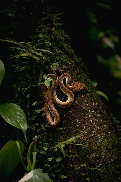 Ilmainen kuvapankkikuva tunnisteilla costa rica, eläin, eläinkunta
