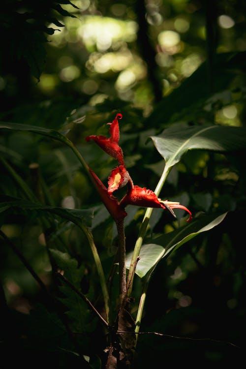 Ilmainen kuvapankkikuva tunnisteilla auringonvalo, costa rica, kasvi