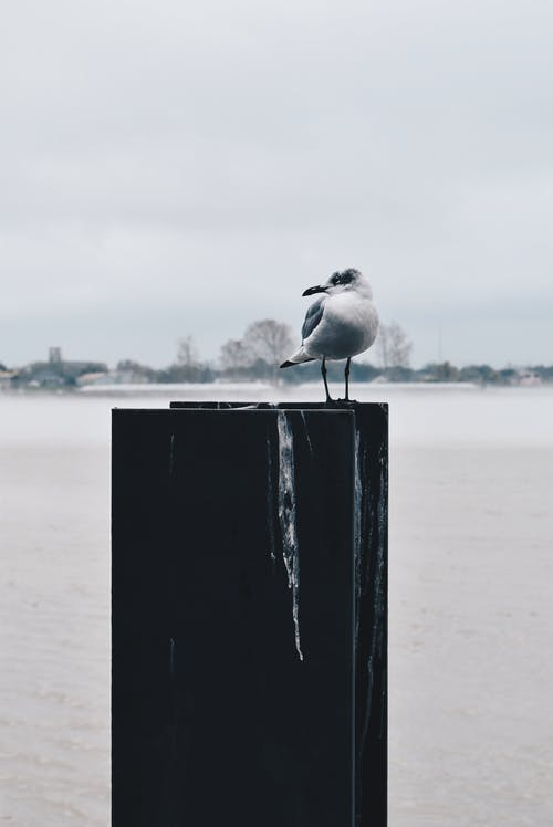 Gray and White Seagull on Top of Board at Daytime