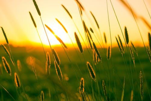 Fotos de stock gratuitas de afecto, amanecer, calor, campo