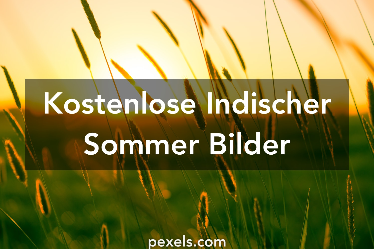 1000 indischer sommer fotos pexels kostenlose stock fotos. Black Bedroom Furniture Sets. Home Design Ideas