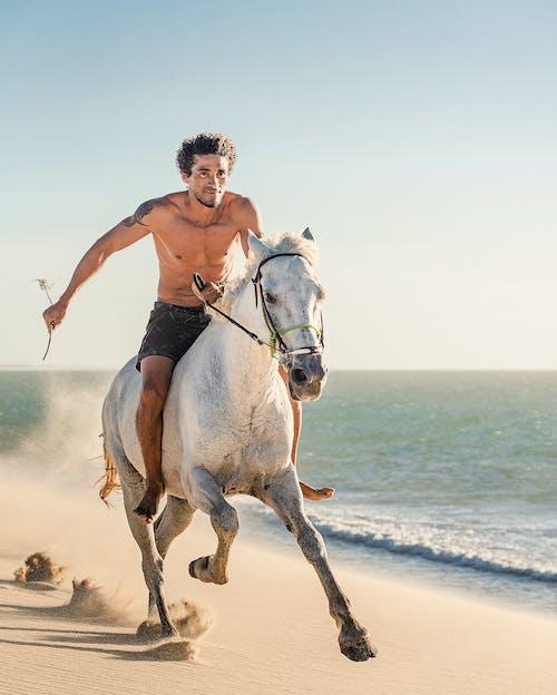 açık hava, adam, at içeren Ücretsiz stok fotoğraf